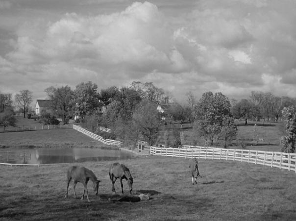 AJ Horses